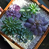 Realistic Fake Artificial Succulent Plants Unpotted Fake Cactus for Home Gardern Diy Decoration 6...