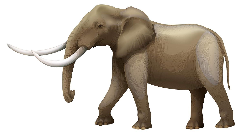 Wandtattoo autocollant mural pour chambre d'enfant Éléphant Motif animal pour c