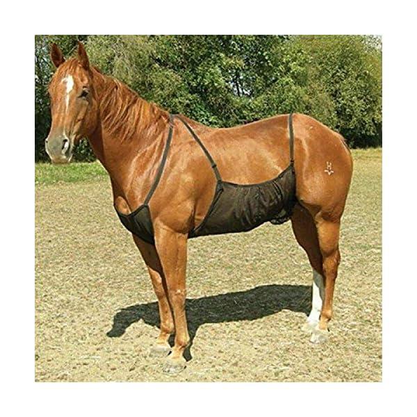 HilMe Cavallo Fly Tappeti, Cavallo Addome Coperte Elasticità Anti-zanzara Rete per Outdoor, Regolabile Flysheet Rete… 2 spesavip