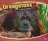 Orangutans, Joanne Mattern, 1429648481