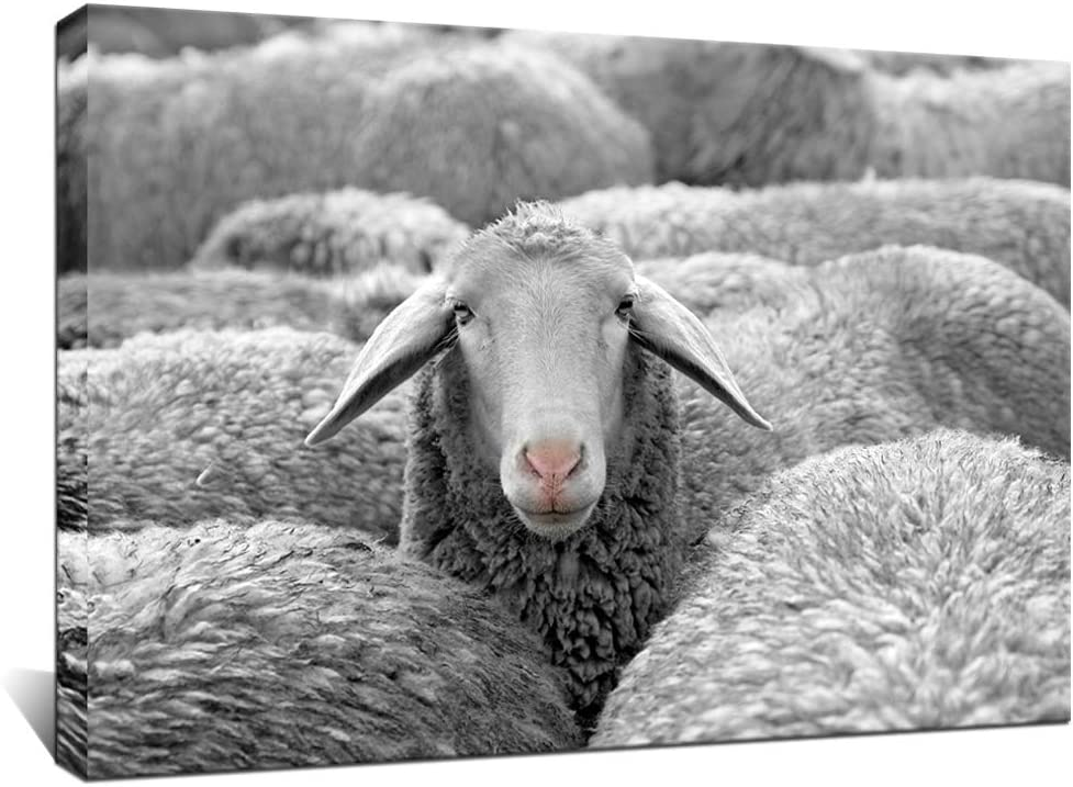 Biuteawal - Black and White Animal Wall Art Painting Cute Sheep in Farmhouse Picture Print on Canvas Modern Giclee Artwork for Home Living Room Bedroom Decoration Stretched and Framed Ready to Hang