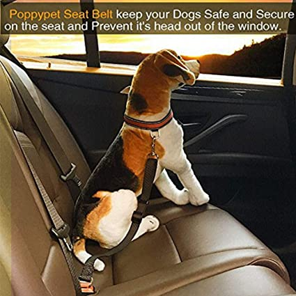 Amasawa Hunde Sicherheits Gurt Fürs Auto Sicherheitsgurt Für Hunde Mit Elastischer Passend Für Alle Hunderassen Verbindungsgurt Aus Robustem Nylon Für Höchste Sicherheit 2 Stück Haustier