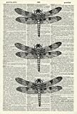 Dragonflies Art Print - Vintage Art Print - Vintage Dictionary Art Print - Dragonfly - Black & White - Book Art Print - Wall Art - Illustration - Picture - Wall Hanging - Insect Artwork 802D