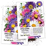 Seed Needs, Single Mix China Aster (Callistephus chinensis) Twin Pack of 1,000 Seeds Each