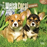 Welsh Corgi Puppies 2016 Mini 7x7 (Multilingual Edition) by Browntrout Publishers (2015-07-15)