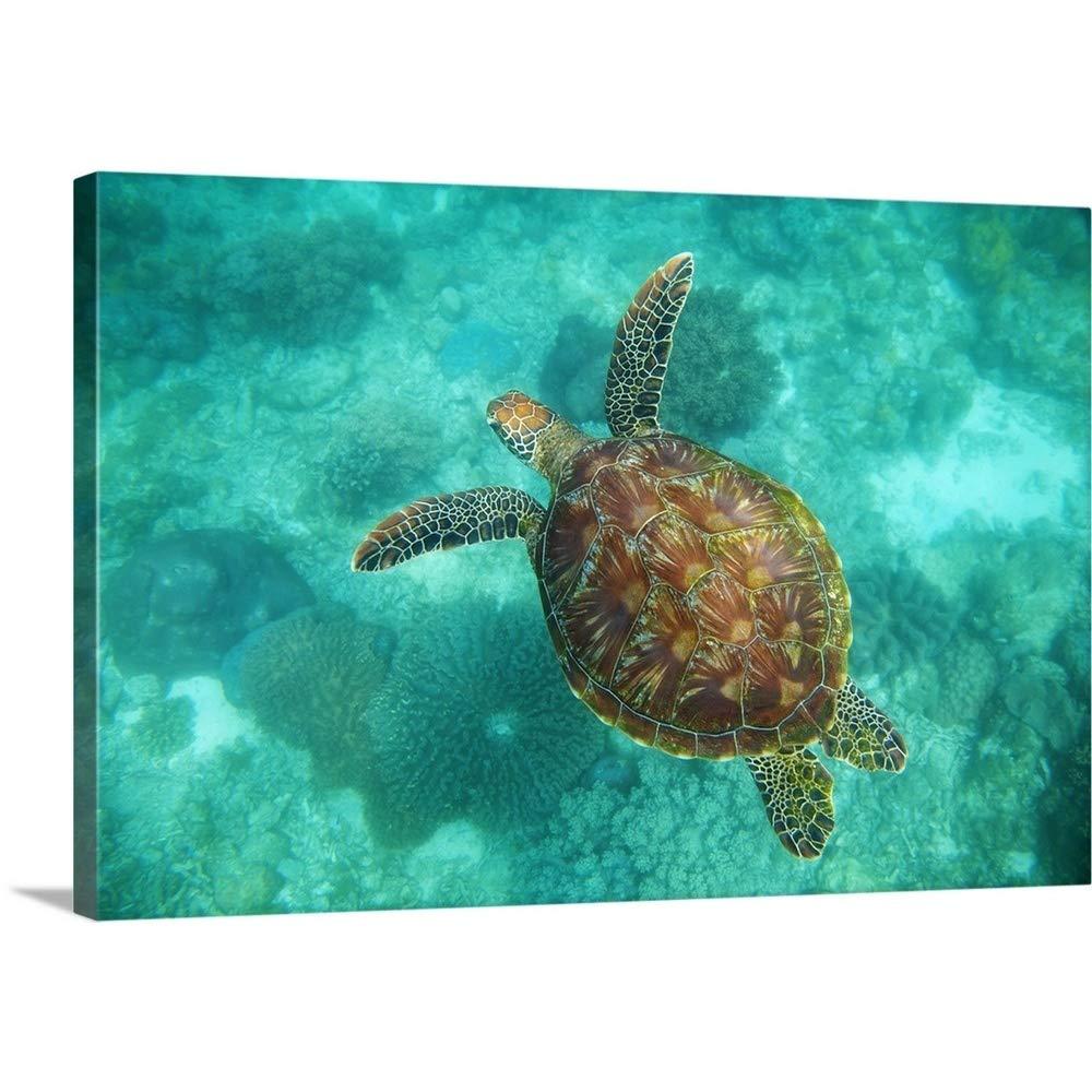 Seanホワイトプレミアムシックラップキャンバス壁アート印刷題名A Sea Turtle Underwater泳ぐ; Apo島、フィリピンNegrosオリエンタル、 30
