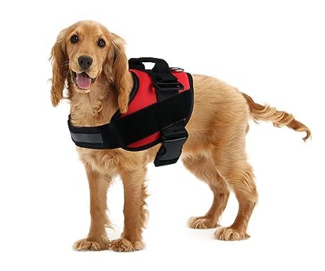 AMZNOVA - Arnés de entrenamiento para perro sin tirones, arnés de ...
