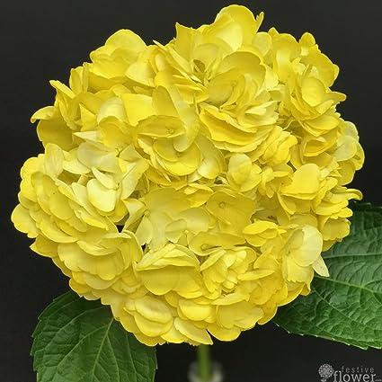 Amazon bright yellow hydrangea flowers for centerpieces set bright yellow hydrangea flowers for centerpieces set of 15 20 or 40 mightylinksfo