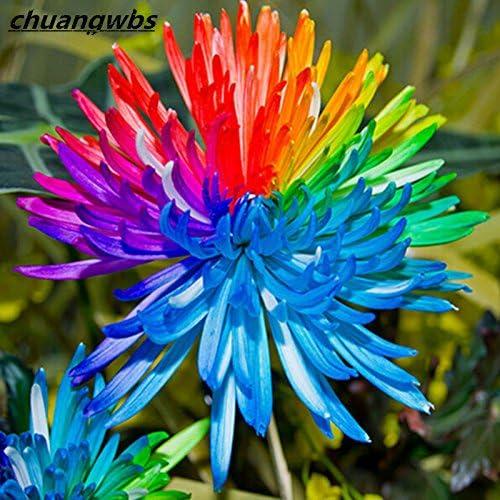 flores perennes 100pcs arco iris de semillas de flores de crisantemo semillas de plantas bonsai en macetas para el jardín de: Amazon.es: Jardín