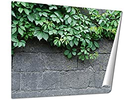 Ashley Giclee Green Leaves Of Ivy Virginia Creeper On Bare Boards Of A Wooden Fence, 24x30 Print