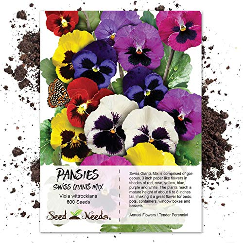 Seed Needs, Swiss Giants Pansy (Viola wittrockiana) 600 Seeds Non-GMO