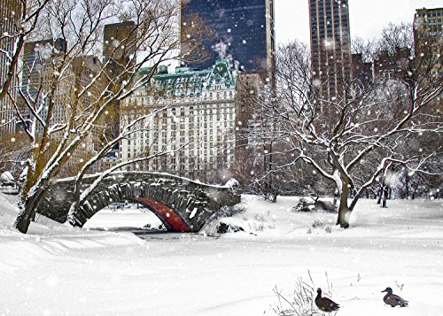 New York Christmas Holiday Cards Ducks by Love Bridge Central Park Snow Boxed 12 Pack of 5x7 Cards Envelopes Included. Greeting Cards Collection Christmas in New York