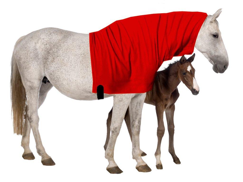 Pferdehalsdecken Abschwitzdecke Halsteil, viele Farben, alle Grö ß en alle Grö ß en (Shetty Marine) B01N9ZZ1KH