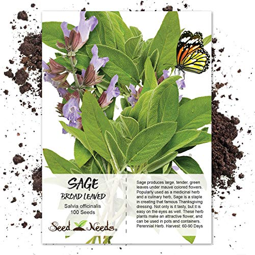 (Package of 100 Seeds, Broad Leaved Sage Herb (Salvia officinalis) Non-GMO Seeds by Seed Needs)