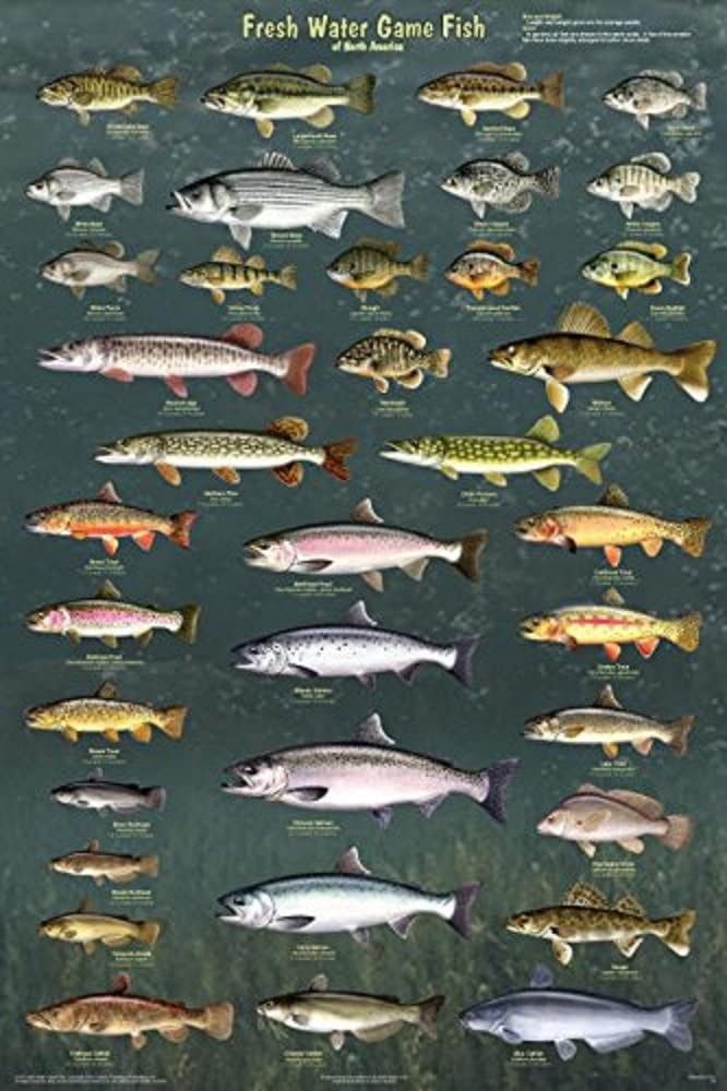 Laminated Fresh Water Game Fish of North America Educational Reference Chart Print Poster 24x36