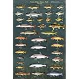 Picture Peddler Fresh Water Game Fish of North America Laminated Educational Reference Chart Print Poster 24x36
