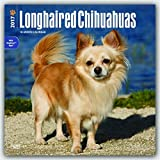 Longhaired Chihuahuas 2017 Square Wall Calendar