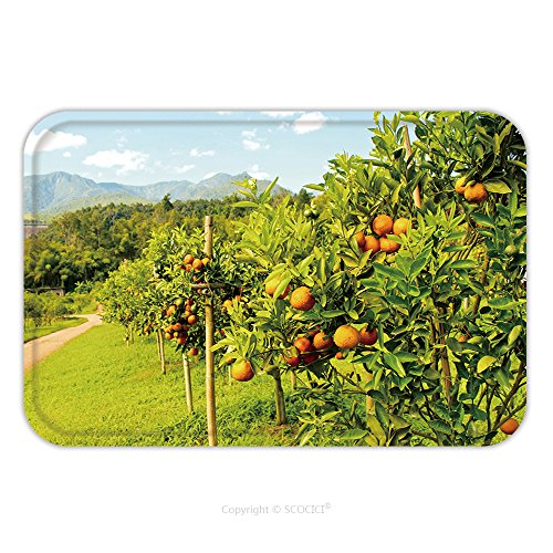 Orchard Coupe (Flannel Microfiber Non-slip Rubber Backing Soft Absorbent Doormat Mat Rug Carpet Orange Groves And Mountain Backdrop Orange Orchard Orange Tree 139951858 for Indoor/Outdoor/Bathroom/Kitchen/Workstatio)