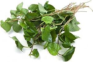 HOUTTUYNIA CORDATA Live Plant Non-GMO Organic Healthy Strong Root Live Plant Fish Mint Diep Ca Dap Ca