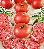 Better Boy Hybrid Tomato 30 Seed