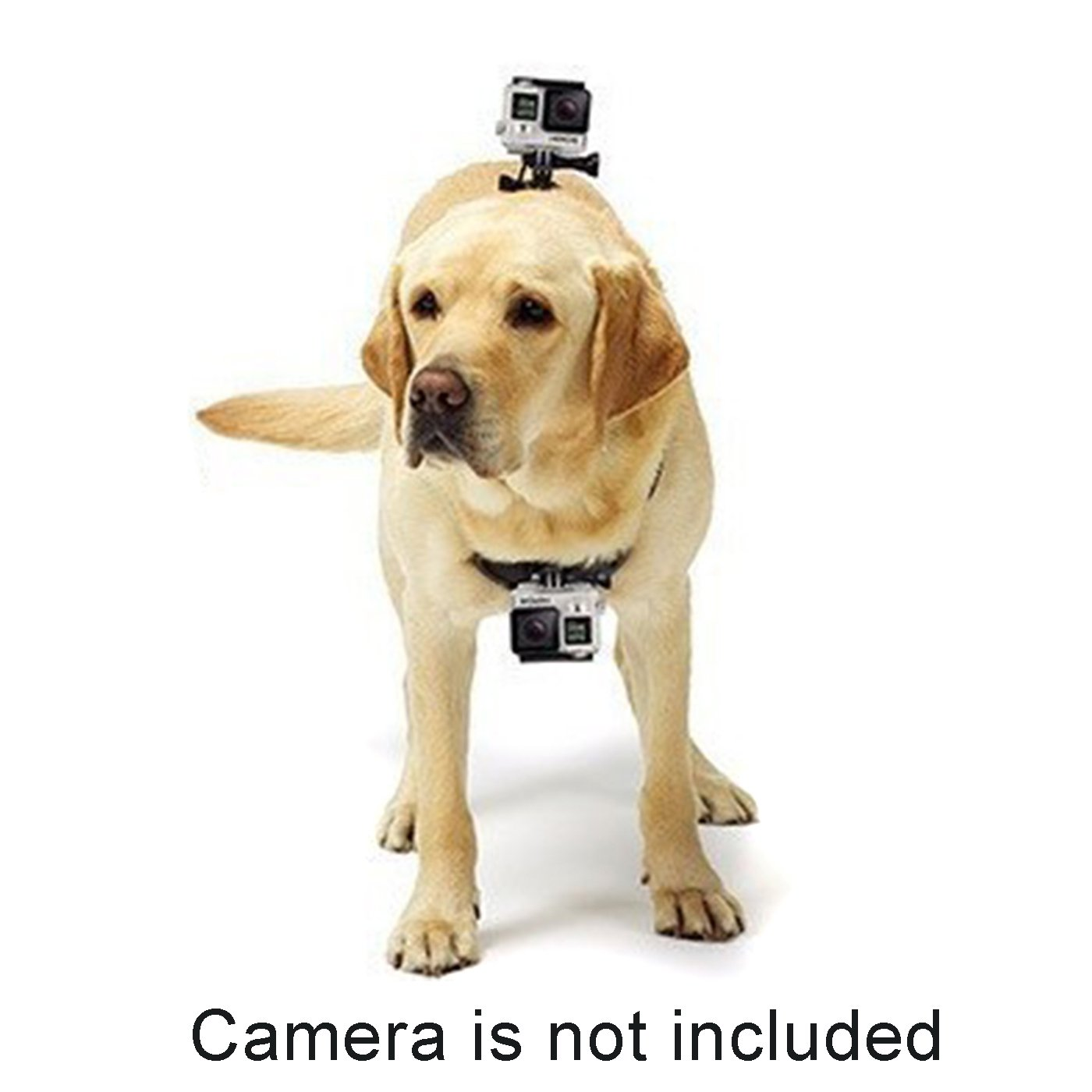 Alfie Pet by Petoga Couture - Enfys GoPro Hero 4/3+/3/2/1 Harness for Pet by Alfie (Image #3)