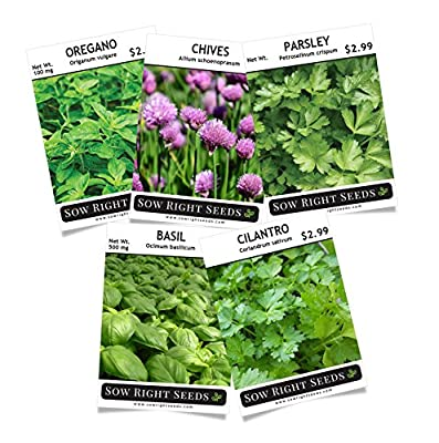 Sow Right Seeds - Herb Garden Seed Collection - Basil, Chives, Cilantro, Oregano, Parsley; All Non GMO Heirloom Seeds with full instructions for planting an easy to grow kitchen garden, indoor or o