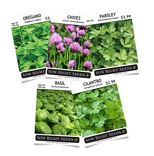 Cilantro Herb - Sow Right Seeds - Herb Garden Seed Collection - Basil, Chives, Cilantro, Oregano, Parsley; All Non GMO Heirloom Seeds with full instructions for planting an easy to grow kitchen garden