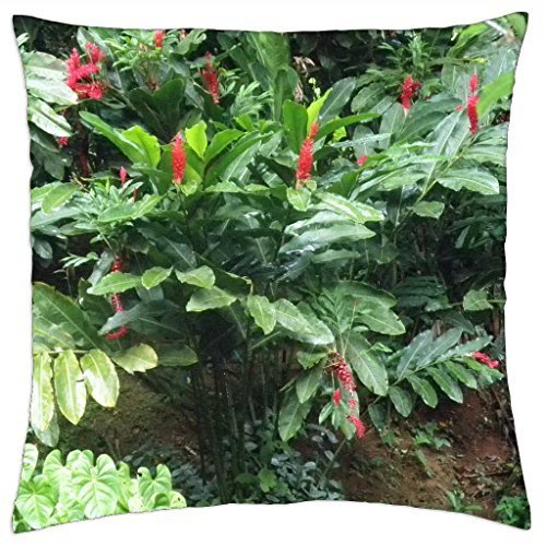 (Red Flowers from St. Lucia Islands - Throw Pillow Cover Case (16)