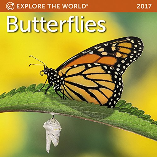 Butterflies Mini Wall Calendar 2017