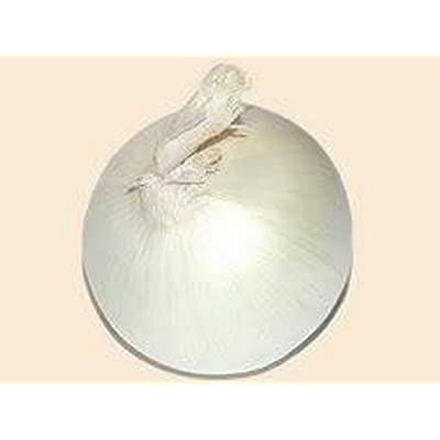 Onion- Sweet White Spanish - 200 Seeds : Garden & Outdoor
