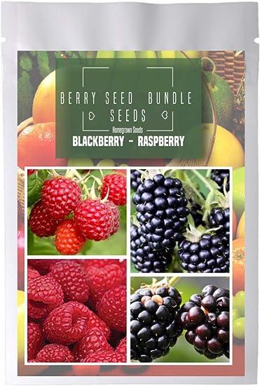 Homegrown BlackBerry Raspberry Seeds Bundle 4 Packets 480 Seeds Sunrise