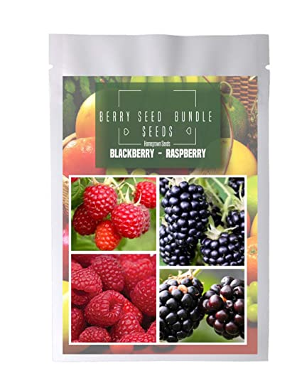 Amazon.com: Homegrown BlackBerry Raspberry Seeds, 480 ...