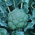 100 Arcadia Broccoli Seeds