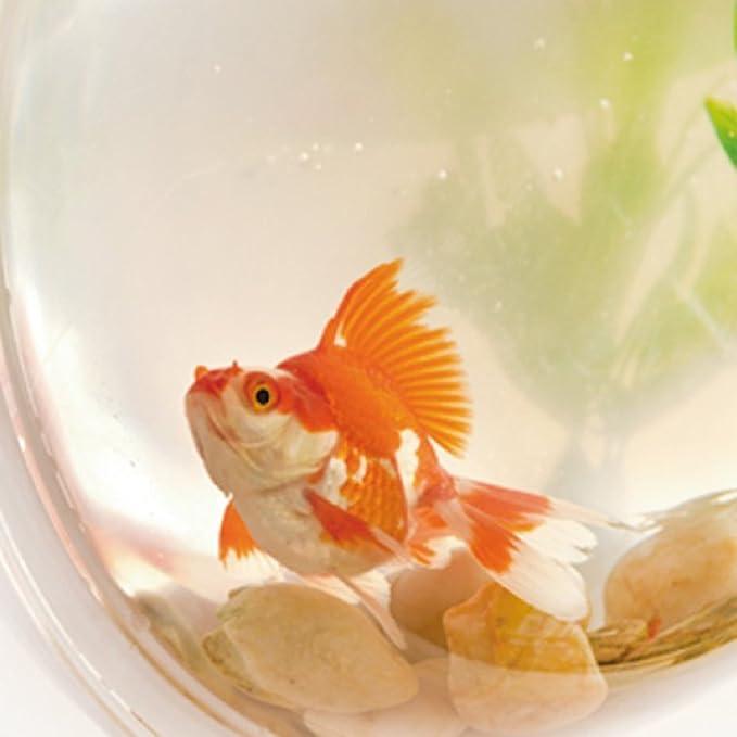 Ailier acuario tanque para peces, creativo cuenco transparente de planta, acuario burbuja pantalla plana, acuario para decoración del hogar: Amazon.es: ...