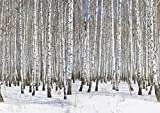 JP London MDXL6001PS Winter Birch Forest Black and White Trees Full Wall Removable Mural, 12' x 8.5'