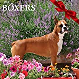 Goldistock 2020 Large Wall Calendar -'Boxers' - 12' x 24' (Open) - Thick & Sturdy Paper - - Strong and Fearless Yet Playful and Kid-Loving Dog