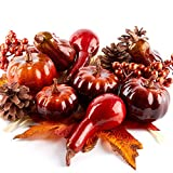 Factory Direct Craft Autumn Pincones, Raffia, Berry Cluster, Pumpkin and Gourd Decorating Kit   For Indoor Holiday Decor