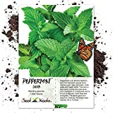 1,000 Seeds, Peppermint Herb (Mentha piperita) Seeds By Seed Needs