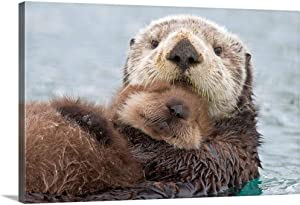 Female Sea Otter Holding Newborn pup Out Canvas Wall Art Print, Wildlife Artwork
