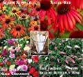 Bulk 2 Coneflower Seeds (Echinacea) 470 Seeds Upc 650327337732 +4 Plant Markers Carnations Butterfly Bush