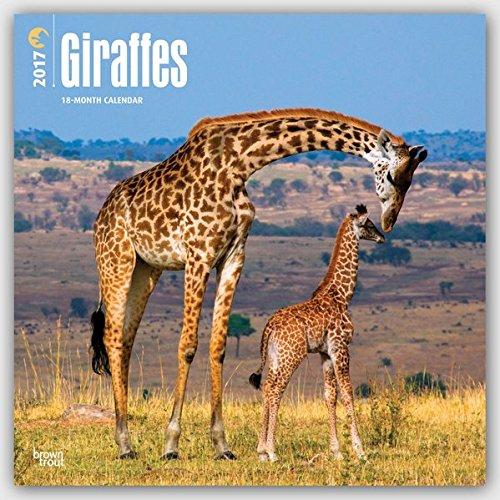 Giraffes - Giraffen 2017-18-Monatskalender: Original BrownTrout-Kalender [Mehrsprachig] [Kalender] (Wall-Kalender)