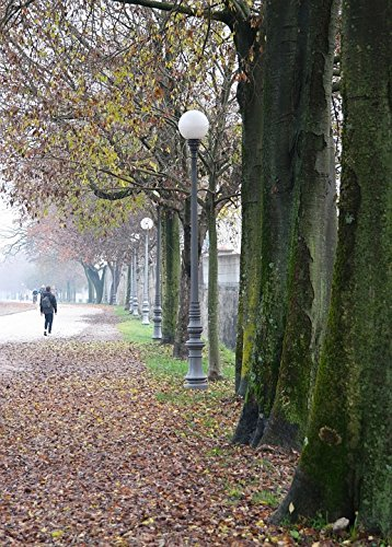 Home Comforts LAMINATED POSTER Italy Road Walk Fog Trees Day Walkway Winter Poster