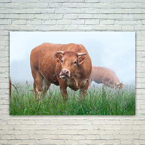 Westlake Art - Cow Cattle - 12x18 Poster Print Wall for sale  Delivered anywhere in Canada