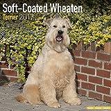 Soft Coated Wheaten Terrier Calendar 2017 - Dog Breed Calendars - 2016 - 2017 wall calendars - 16 Month by Avonside