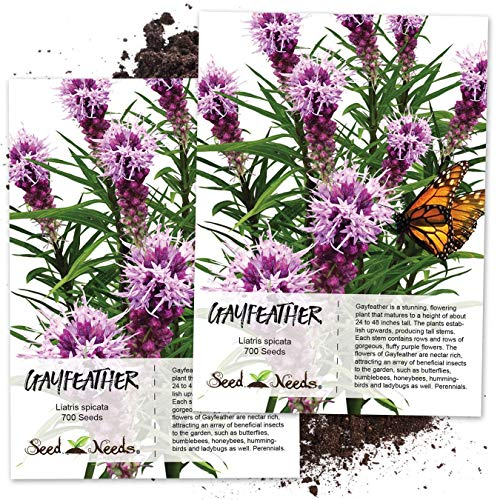 Seed Needs, Gayfeather (Liatris spicata) Twin Pack of 700 Seeds Each