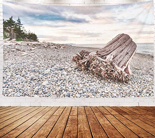 Asdecmoly Boho Wall Decor, Tapestry Wall Hanging Living Room Bedroom 80 Lx60 W Inches June Year Old Tree Trunk Washed Up Pebble Beach Sunset Some Trees in The Background Gwaii Art Printing Inhouse