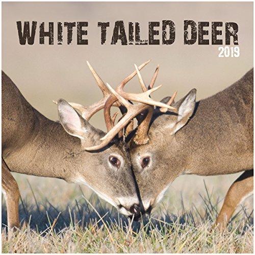 White Photo Wall Calendar - Turner Photo White Tailed Deer 2019 Wall Calendar (199989400590 Office Wall Calendar (19998940059)