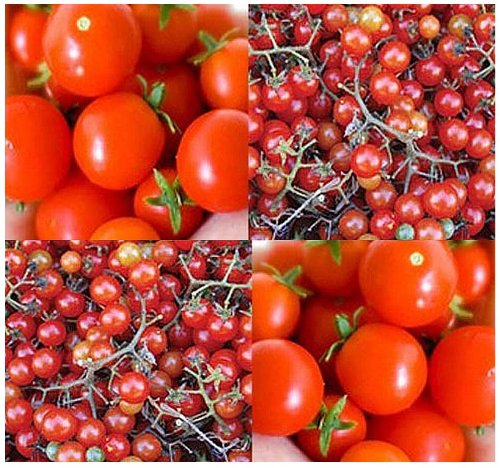 20 Red Currant Spoon Tomato Seeds HEIRLOOM World Smallest Tomatoes Sweet & Tasty