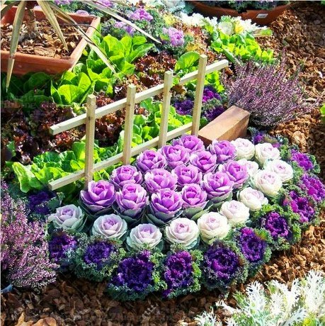 100 Pcs/Bag Flower Seeds Bonsai Flowering Ornamental Cabbage Seeds Plant Flowering Kale In Bonsai Or Pot Garden Decoration 3