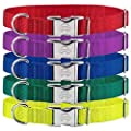 Country Brook Petz | Premium Nylon Dog Collar with Metal Buckle by Country Brook Design